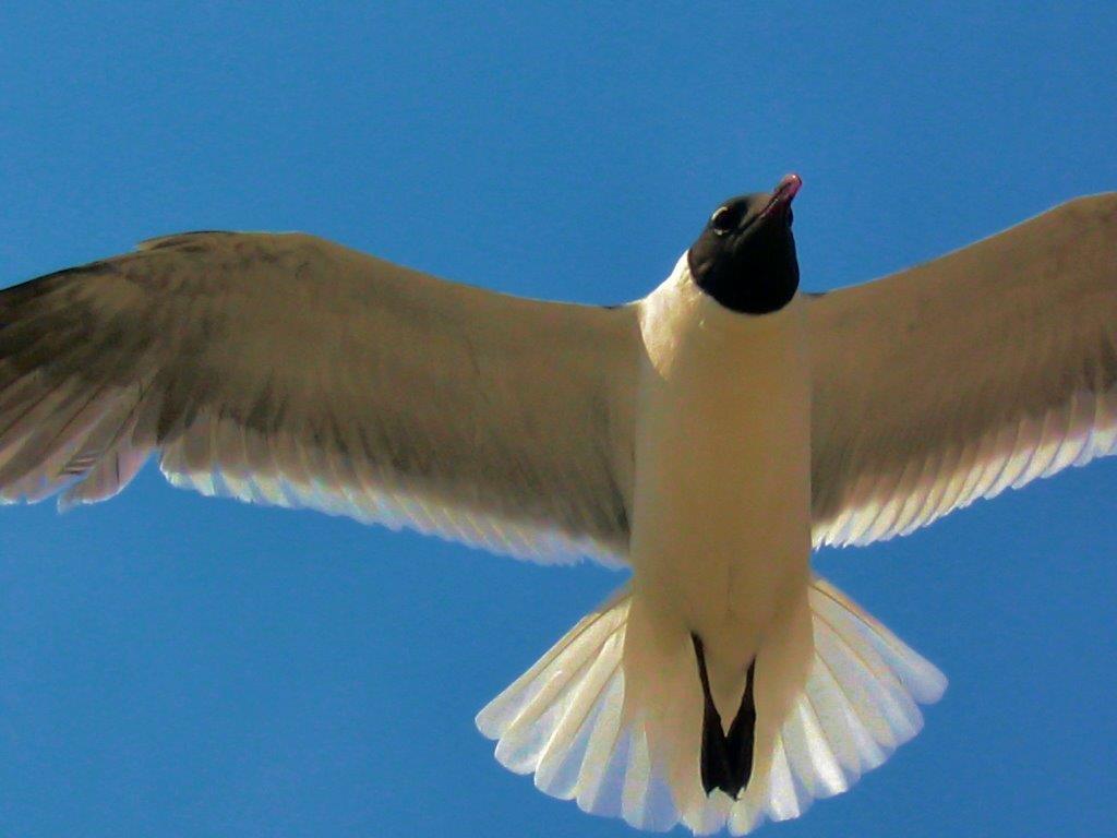soaring-seagull-2
